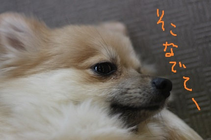 Img_9876